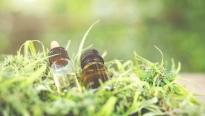 cbd oil bottles hemp plant